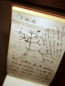 Darwin's Tree of Life Drawing
