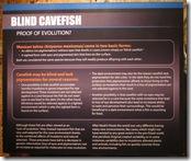 Blind Cavefish