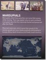 Marsupials what?