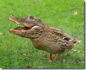 Kirk Cameron's Crocoduck