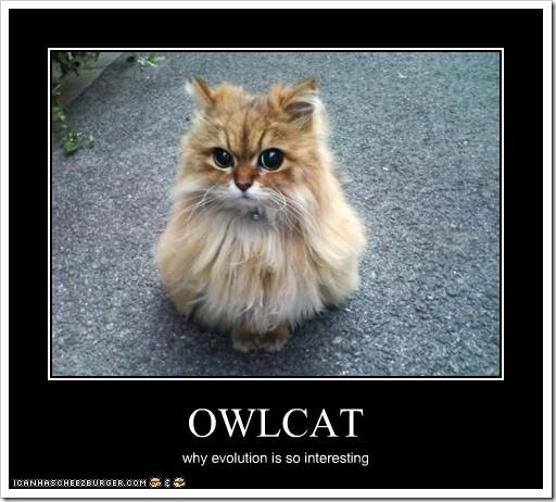OWLCAT - why evolution is so interesting